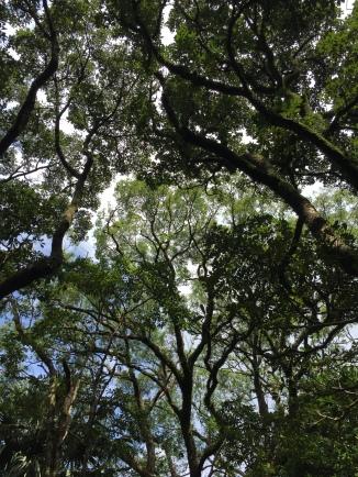 abres-et-feuilles-hong-kong